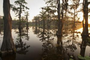 Caddo Lake, Texas, USA by Larry Ditto