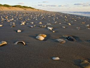 Dunes and Seashells on Padre Island, Texas, USA by Larry Ditto