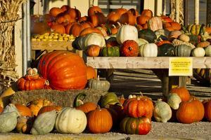 Farmer's Market, Autumn in Luling, Texas, USA by Larry Ditto