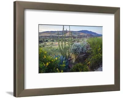 Jeff Davis County, Texas. Davis Mountains and Desert Vegetation