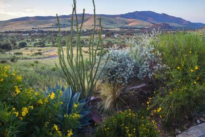 Jeff Davis County, Texas. Davis Mountains and Desert Vegetation by Larry Ditto