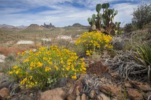 Mule Ears Formation and Wildflowers in Big Bend National Park by Larry Ditto