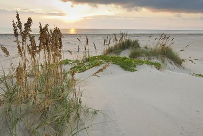 Sea Oats on Gulf of Mexico at South Padre Island, Texas, USA