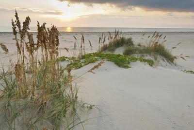 Sea Oats on Gulf of Mexico at South Padre Island, Texas, USA by Larry Ditto