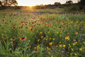Sunset on Texas wildflowers by Larry Ditto