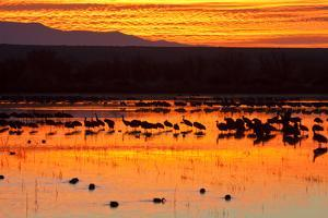 Waterfowl on Roost, Bosque Del Apache National Wildlife Refuge, New Mexico, USA by Larry Ditto