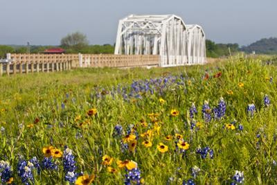 Wild Flowers by Highway and the Llano River, Texas, USA