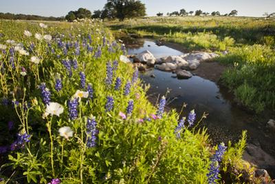 Wildflowers by Hill Country Stream, Texas, USA by Larry Ditto