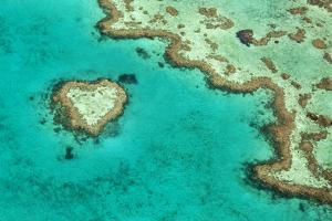 Great Barrier Reef II by Larry Malvin
