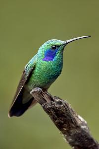 Hummingbird V by Larry Malvin