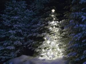 Illuminated Christmas Tree in Snow by Larry Williams