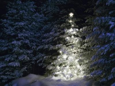 Illuminated Christmas Tree in Snow
