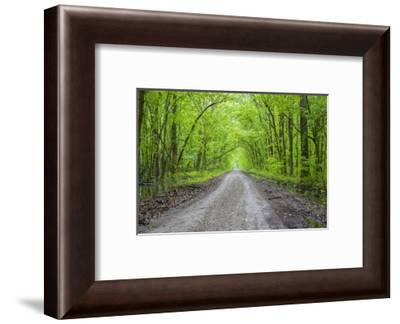 LaRue-Pine Hills Otter Pond Natural Area, Shawnee National Forest. Union County, Illinois.-Richard & Susan Day-Framed Photographic Print