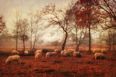 https://imgc.artprintimages.com/img/print/last-days-of-autumn_u-l-q1h4u6y0.jpg?artPerspective=n