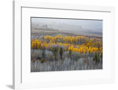 Last Light-William Neill-Framed Giclee Print