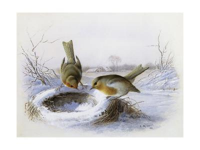 Last Year's Nest-Harry Bright-Giclee Print