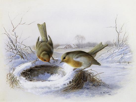 Last Year's Nest-Harry Bright-Giclee Print