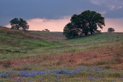 Late Afternoon, Central California-Vincent James-Photographic Print