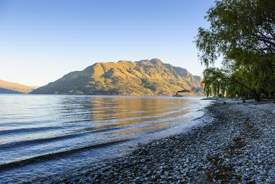 Late Afternoon Light over the Shores of Lake Wakatipu-Michael-Photographic Print