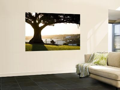 Late Afternoon on Lawn Overlooking Sydney Harbour at Sydney Observatory-Greg Elms-Wall Mural