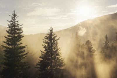https://imgc.artprintimages.com/img/print/late-afternoon-sun-shining-trhough-the-lifting-fog_u-l-q1bbms60.jpg?p=0