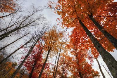 Late Autumn Tree Tops, New Hampshire-Vincent James-Photographic Print