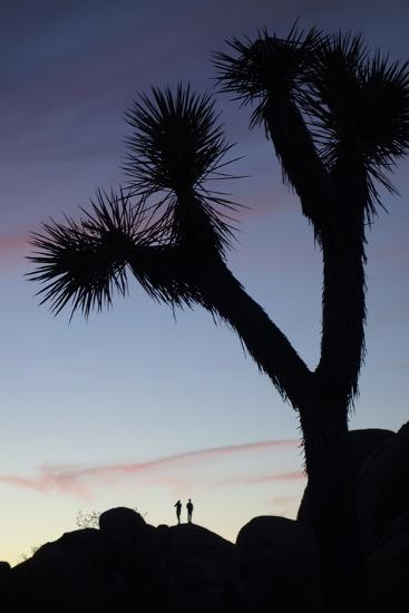 Late Rays of Light at Sunset in Joshua Tree National Park, California-Bill Hatcher-Photographic Print