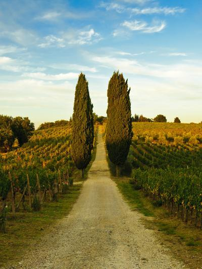 Late Summer Wine Scene in the Hills of Panzano, Tuscany, Italy-Richard Duval-Photographic Print