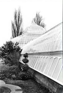 Conservatory IV by Laura Denardo