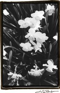 Springtime Garden V by Laura Denardo