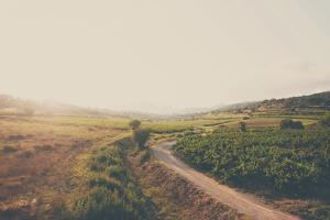 French Vineyards by Laura Evans