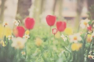 Red Tulips and Dafodils by Laura Evans
