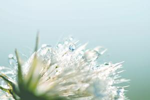 Water Droplets on Flower by Laura Evans
