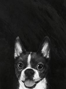 Bostonterrier by Laura Graves