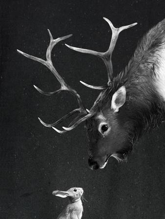 Elk&Rabbit
