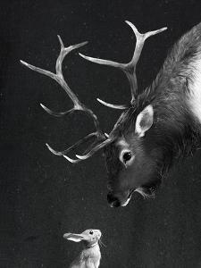 Elk&Rabbit by Laura Graves