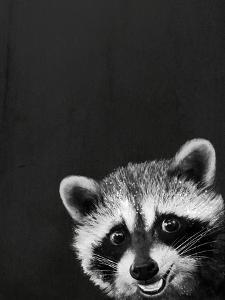 Raccoon by Laura Graves