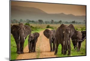 African Elephant Family on Safari, Mizumi Safari Park, Tanzania, East Africa, Africa by Laura Grier