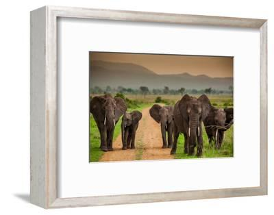 African Elephant Family on Safari, Mizumi Safari Park, Tanzania, East Africa, Africa