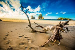 Driftwood in Golden Bay, Tasman Region, South Island, New Zealand, Pacific by Laura Grier