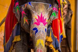 Painted Elephant, Amer Fort, Jaipur, Rajasthan, India, Asia by Laura Grier