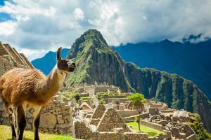 Resident Llama, Machu Picchu Ruins, UNESCO World Heritage Site, Peru, South America by Laura Grier