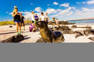 Sea lions on Floreana Island, Galapagos Islands, Ecuador, South America by Laura Grier