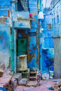 Street Scene of the Blue Houses, Jodhpur, the Blue City, Rajasthan, India, Asia by Laura Grier