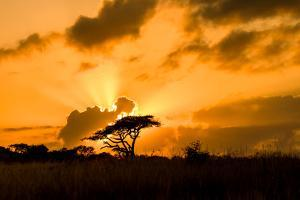 Sunset, Zululand, South Africa by Laura Grier