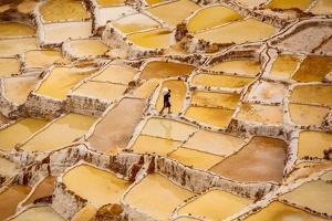 Worker Mining for Salt, Salineras De Maras, Maras Salt Flats, Sacred Valley, Peru, South America by Laura Grier