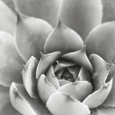 Garden Succulent III by Laura Marshall