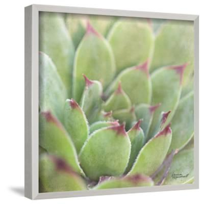 Garden Succulents I Color by Laura Marshall