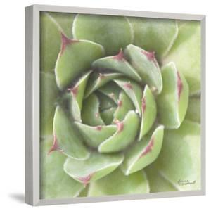 Garden Succulents II Color by Laura Marshall