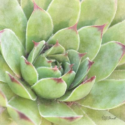Garden Succulents IV Color by Laura Marshall